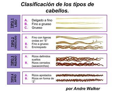 clasificación de los rizos_